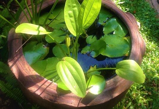 Schale mit Lotospflanzen als Symbol der Unsterblichkeit in China